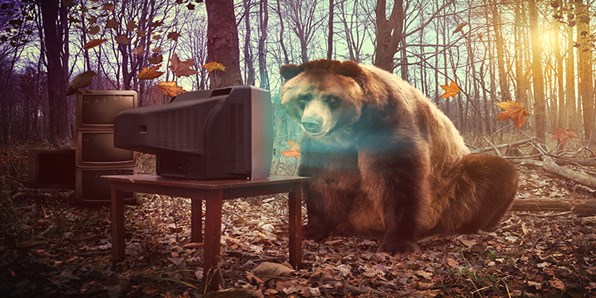 Bear in front of a computer in the woods